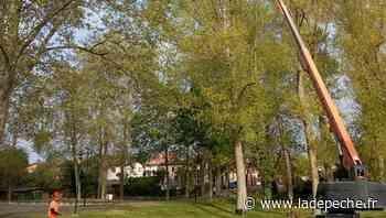 Portet-sur-Garonne. Elagage au Ramier, plantations en ville - ladepeche.fr