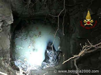 Viano: cane cade in un pozzo, salvato dai Vigili del fuoco - Bologna 2000