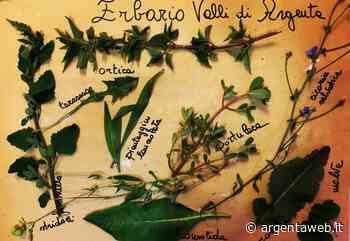 Le piante delle Valli di Argenta - ArgentaWeb - ArgentaWeb