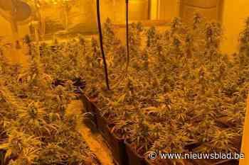 Tip leidt naar cannabisplantage met marktwaarde van meer dan een kwart miljoen euro