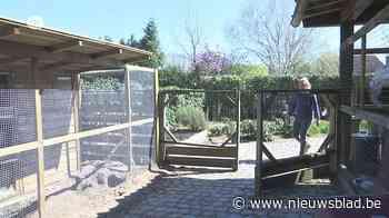 Gezocht: nieuw huisje voor ex-proefkonijnen