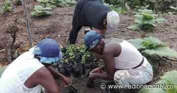 Mujeres víctimas del conflicto en Bagadó, Chocó, le apuestan a la paz cultivando - Radio Nacional de Colombia