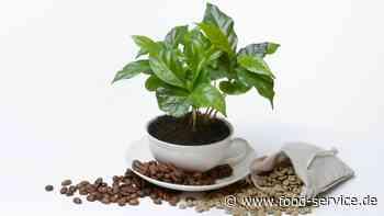 Turin: Slow Food Coffee Coalition gegründet - Food Service