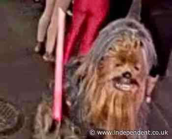 Man in Chewbacca costume accused of New Orleans stabbing