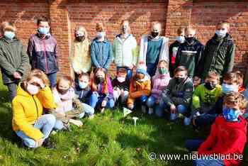 Zesdeklassers observeren hun 'gazondolk' (Sint-Lievens-Houtem) - Het Nieuwsblad