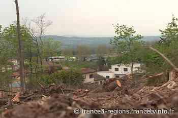 A Lissieu (Rhône) les habitants choqués par la coupe d'une centaine d'arbres centenaires près de chez eux - France 3 Régions