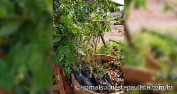 Agricultores de Taquarituba recebem mudas de árvores nativas - Jornal Sudoeste Paulista