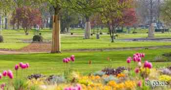 Park in Bad Neuenahr-Ahrweiler: Der Dahliengarten öffnet wieder - ga.de