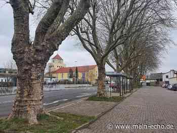Elsenfeld: Vier alte Platanen weichen Parkplätzen - Main-Echo