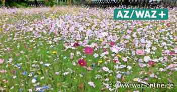 Blumenwiesen in Meinersen gegen das Insektensterben: Tipps auch für den eigenen Garten - Wolfsburger Allgemeine