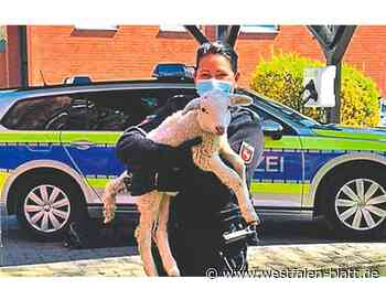 Polizei rettet festgebundenes Lämmchen aus Hinterhof - Westfalen-Blatt