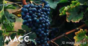 Em Palmela, há uma nova motivação para caminhar: vinho (e não nos ocorre melhor razão) - MAGG