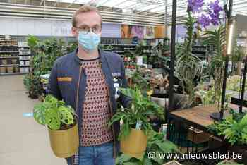 Plant is zo uitzonderlijk dat het is als de lotto winnen: 'gatenplant' van 1.799 euro binnen halfuur verkocht