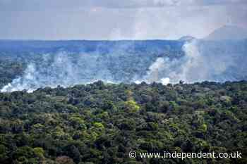 Climate crisis: Deforestation of Amazon rainforest has accelerated since Bolsonaro took office, report finds