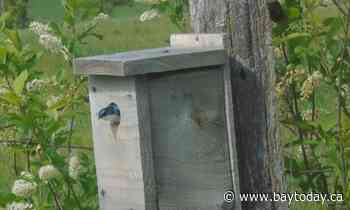 McKellar trio building bird boxes for bluebirds, tree swallows and wrens - BayToday.ca