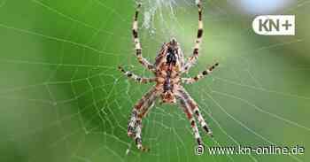 Lensahn: Spinne verursacht Unfall auf der A1 - Kieler Nachrichten