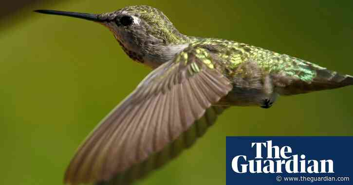 Canada: hummingbirds succeed in halting controversial pipeline construction