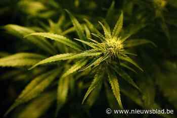Cannabisplantage ontmanteld in Ukkel - Het Nieuwsblad