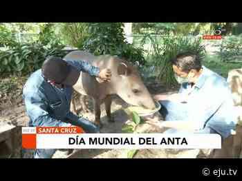Hoy es el Día Mundial del Anta - eju.tv