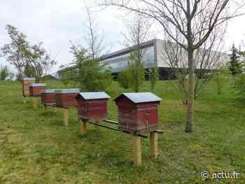 A Meaux, des abeilles vivent désormais au musée de la Grande Guerre - actu.fr