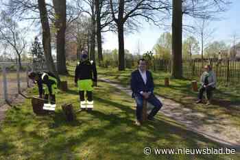 Zulte sprokkelt 230 boomstammen voor corona-zitcirkels (Zulte) - Het Nieuwsblad