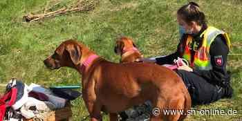 Unfall auf A1 bei Sittensen: Polizei als Hundesitter im Einsatz - Schaumburger Nachrichten