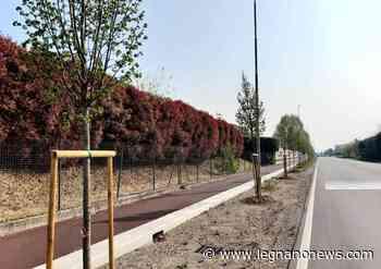 Parabiago, da inizio anno piantati 300 nuovi alberi e arbusti in città - LegnanoNews