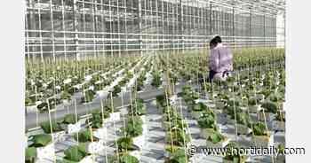 global greenhouse news - hortidaily.com