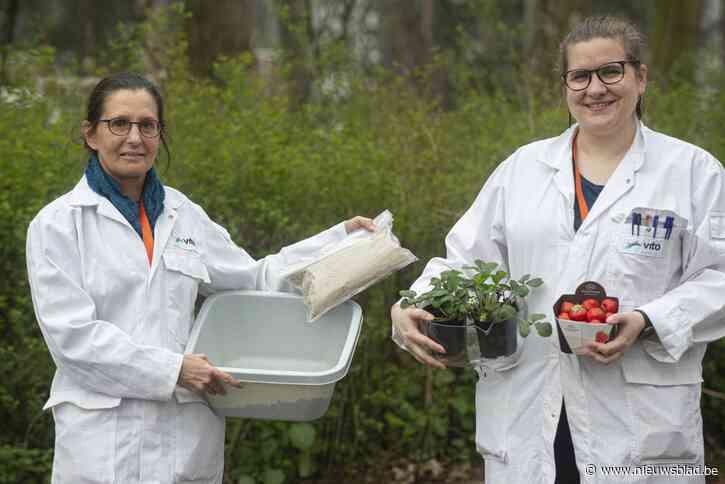 Lise (30) maakt aardbeien groter en gezonder …met vel van insecten