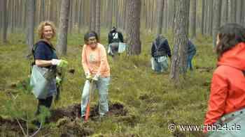 Video | Tag des Baumes: Freiwillige pflanzen 5.000 Traubeneichen in der Schorfheide - rbb24