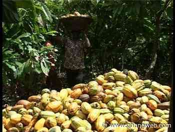 Galamsey or Cote d'Ivoire - Cocoa farmers threaten govt - GhanaWeb