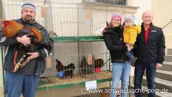 Riesengockel und Schlappohren zu haben | Lauchheim - Schwäbische Post