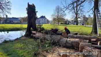 Un cyprès centenaire incendié au parc floral de Liancourt - Courrier Picard