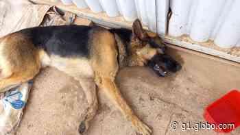 Cachorro é agredido com pauladas pelo próprio dono em Caratinga - G1
