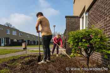Wijk Rozenlaan in Gierle krijgt groener uitzicht en veiligere verkeerssituatie