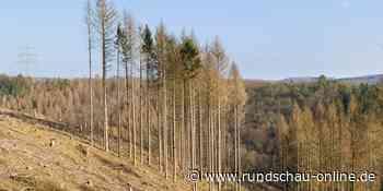 Morsbach: Verwaltung will das Klima schützen und kauft Wald - Kölnische Rundschau