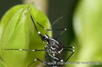 Ludwigshafen: In der Melm beginnt die Tigermücken-Bekämpfung - Ludwigshafen - Nachrichten und Informationen - Mannheimer Morgen