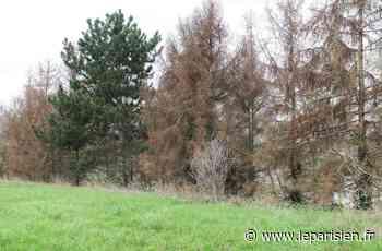 Dugny : l'inquiétante apparition d'un insecte qui ravage les arbres de l'Aire des Vents - Le Parisien