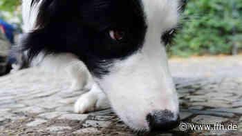 Unbekannte vergiften vier Hunde in Baunatal - HIT RADIO FFH