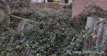 Garden of empty home so overgrown a boat was found hidden underneath the hedge