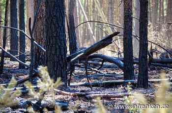 Wilhelmsthal: Waldfläche in Brand geraten - Wind hatte eine Flamme neu entfacht - inFranken.de