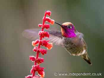 Hummingbird halts construction of controversial oil pipeline