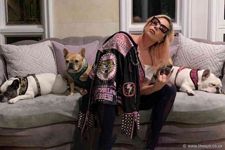 Lady Gaga's 'dognappers' and woman who 'found' pets arrested after dogwalker shooting