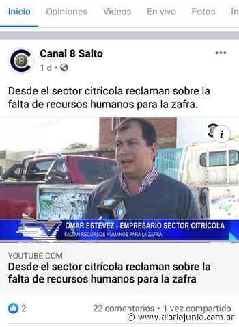 El mismo cantar del otro lado del charco: Un citricultor se quejó de que en Salto tampoco hay mano de obra para la zafra - Diario Junio