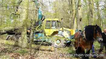 Achtung, Rückepferd im Einsatz: Forstarbeiter in Diez erhalten tierische Unterstützung - Rhein-Zeitung
