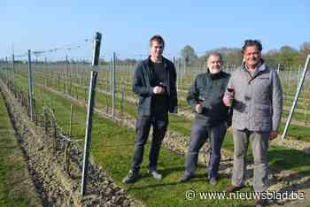 """Eigenaar Roger (68) verkocht zijn wijngaard aan vzw Domein Laagland: """"Samenwerken met lokale restaurants kan ons domein nog meer op de kaart zetten"""""""