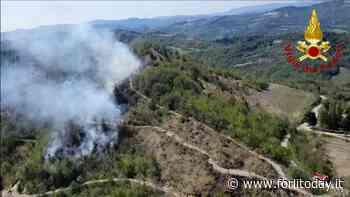 Modigliana, bosco in fiamme: spento l'incendio sul monte Trebbio - ForlìToday