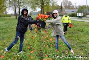 Berendrechtse tulpen voor 50ste verjaardag Vorst Nationaal - Het Nieuwsblad