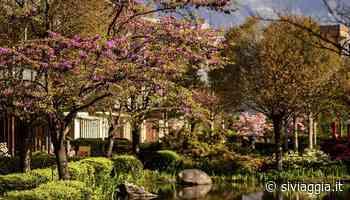Lana è in fiore: spettacolari cartoline di primavera - SiViaggia