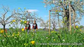 Dotternhausen - Wandern zwischen Bäumen - Schwarzwälder Bote